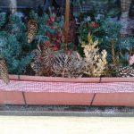 Jak aranžovat květiny do truhlíků