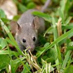 Jak se zbavit strachu z myší