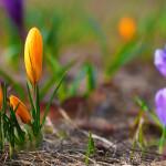 Jak navodit jarní atmosféru