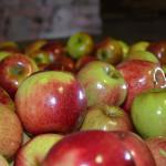 Jak uchovat ovoce?