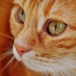 Jak pečovat o kočku po kastraci