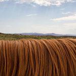 Jak nejrychleji rostou vlasy
