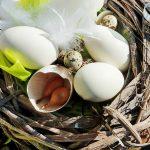 Jak vyrobit velikonoční ozdoby